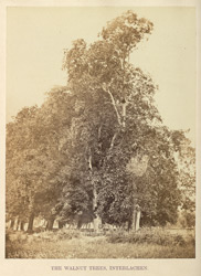 The Walnut Trees, Interlachen